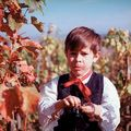 Červené víno [negatív fotografie]